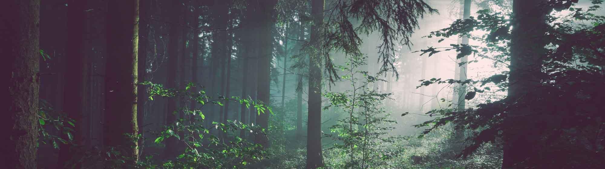 Forêt nature promos slide